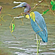 BLUE HERON of COSTA RICA by Joeann Edmonds-Matthew