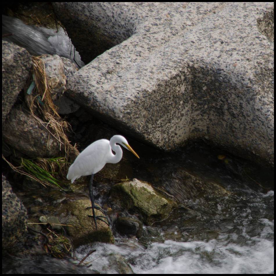 White Water Bird  by Jim Friesen