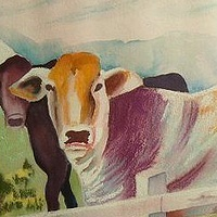 cows_P1010261_test by Jacquie Manning