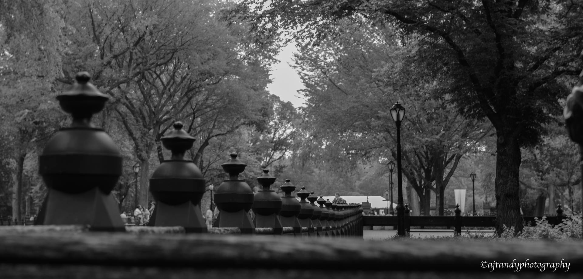 Central Park by Andy Humphrey