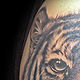 Aj's Tigress Melbourne Australia by Erin  Burge