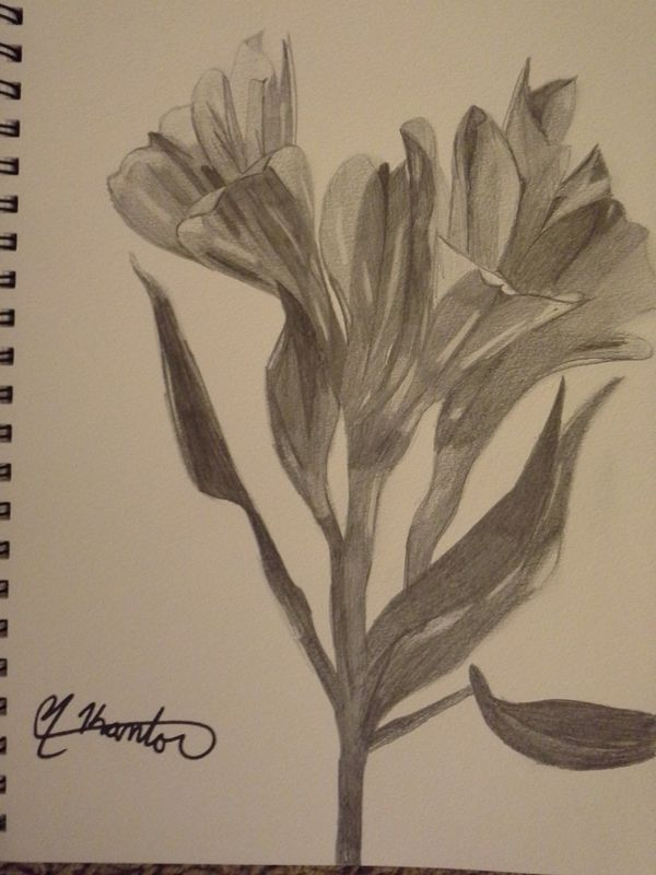 Drawing Flowers 2 by Matt Kantor