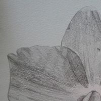 Drawing Orchid 3 by Matt Kantor