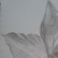 Drawing Orchid  by Matt Kantor