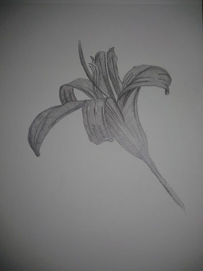 Drawing Flower from campus by Matt Kantor