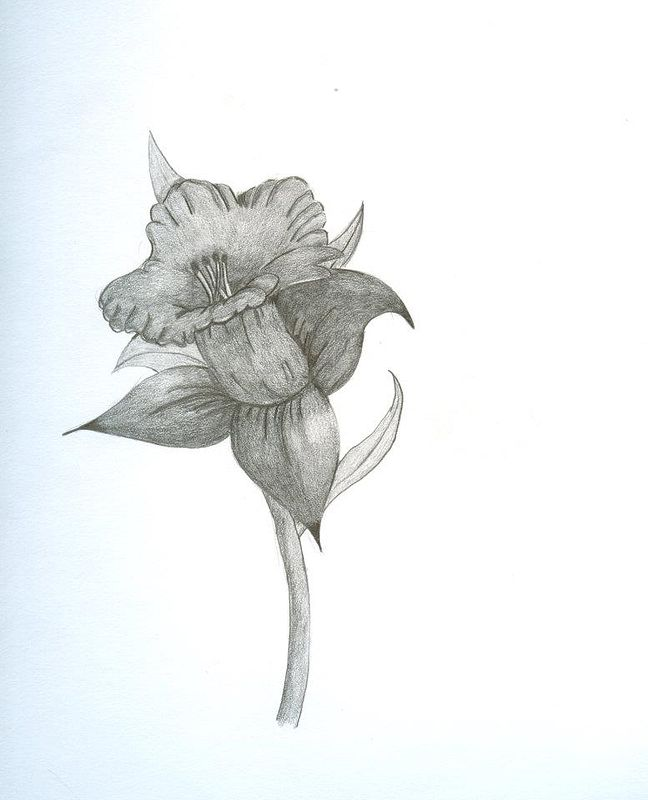 Drawing Flower  by Matt Kantor