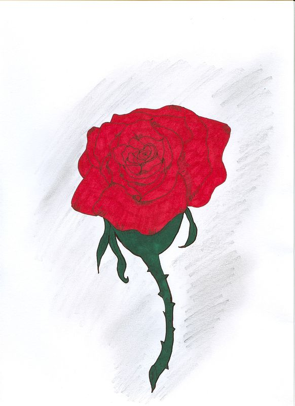 Rose With Pencil Shading by Matt Kantor
