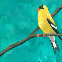 Print Goldfinch C011 by Cody Blomberg