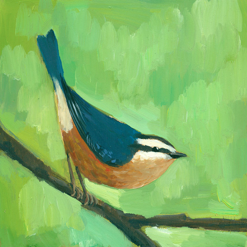 Print Nuthatch C009 by Cody Blomberg