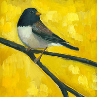 Print Junco C010 by Cody Blomberg
