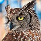 EURASIAN EAGLE-OWL, SPAIN by Joeann Edmonds-Matthew