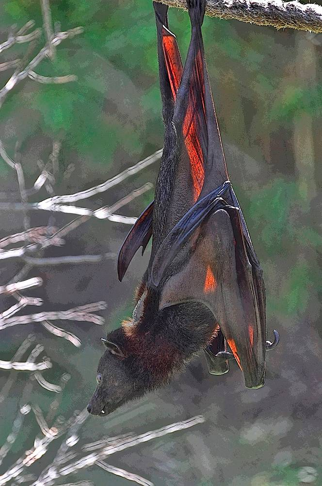 BAT 1 by Joeann Edmonds-Matthew
