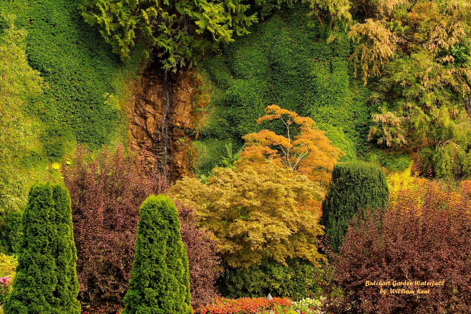 Butchart Garden Waterfall - Portfolio for William Kent - Photographer
