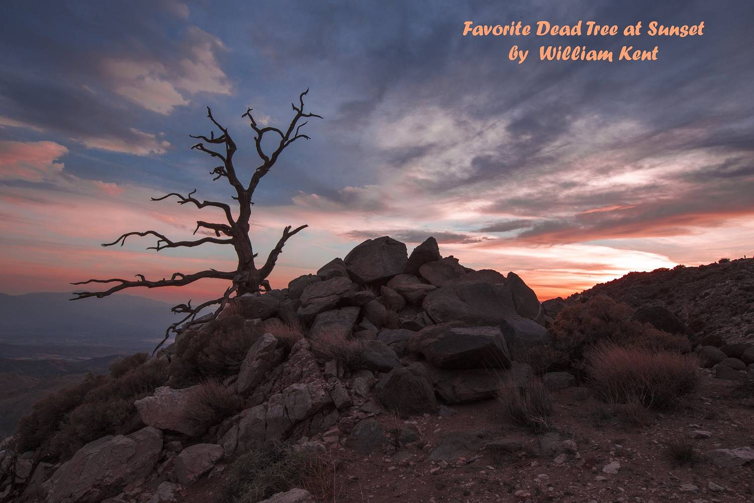 Favorite Dead Tree at Sunset by William Kent
