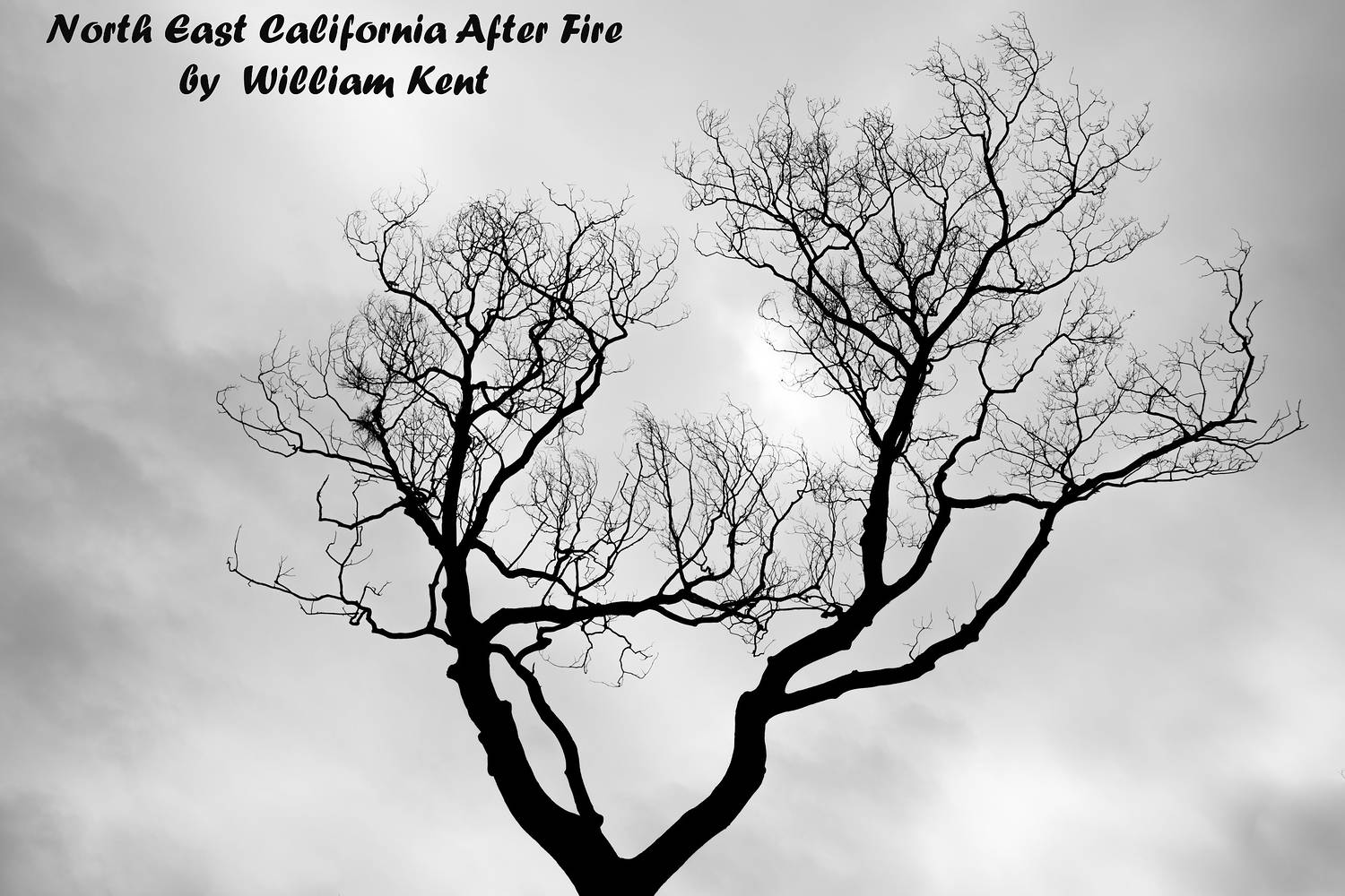 North East California After Fire by William Kent