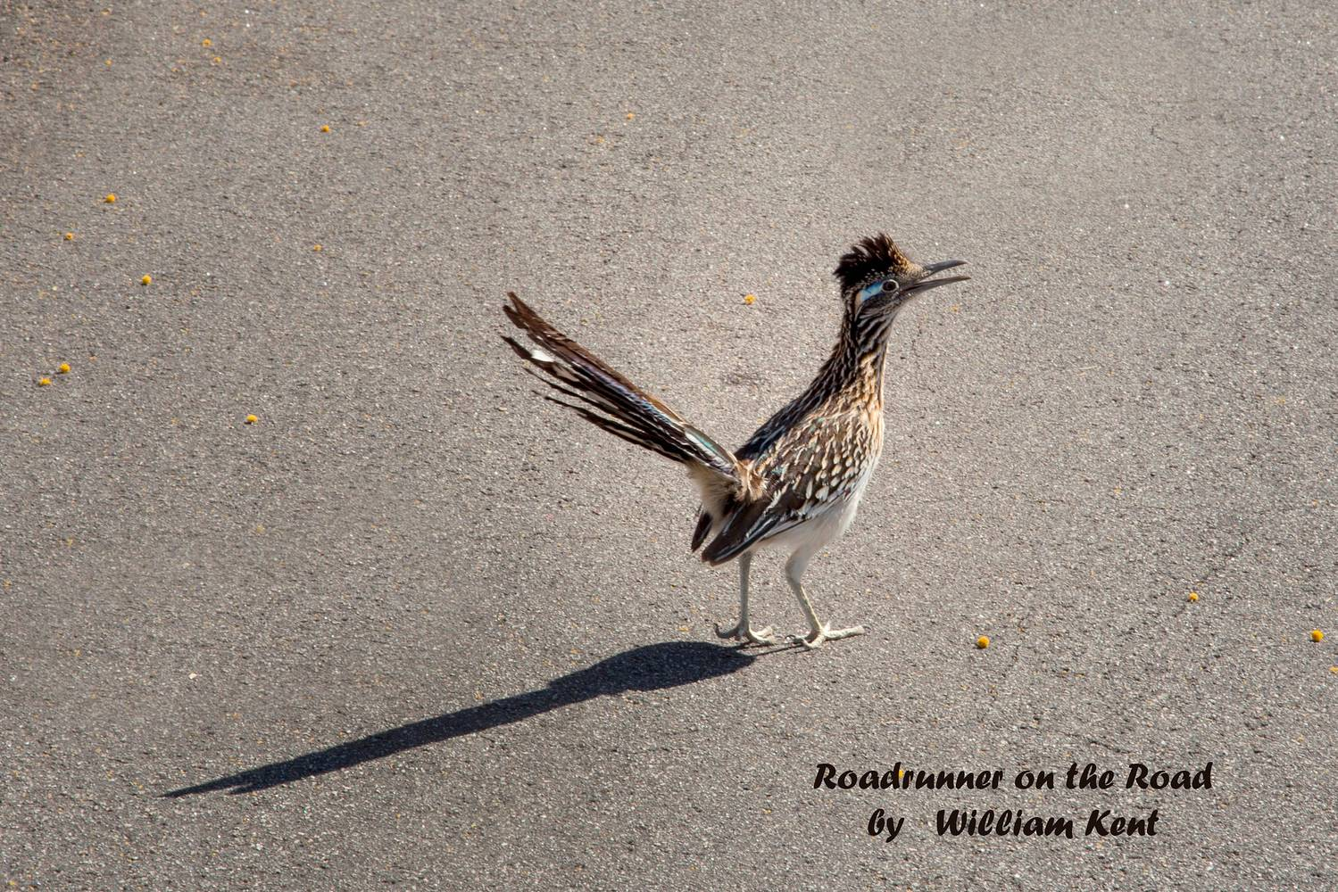 Roadrunner on the Road by William Kent