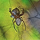 TATOOED SPIDER by Joeann Edmonds-Matthew