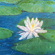 Oil painting Lily on the Pond by Yvonne Shaffer