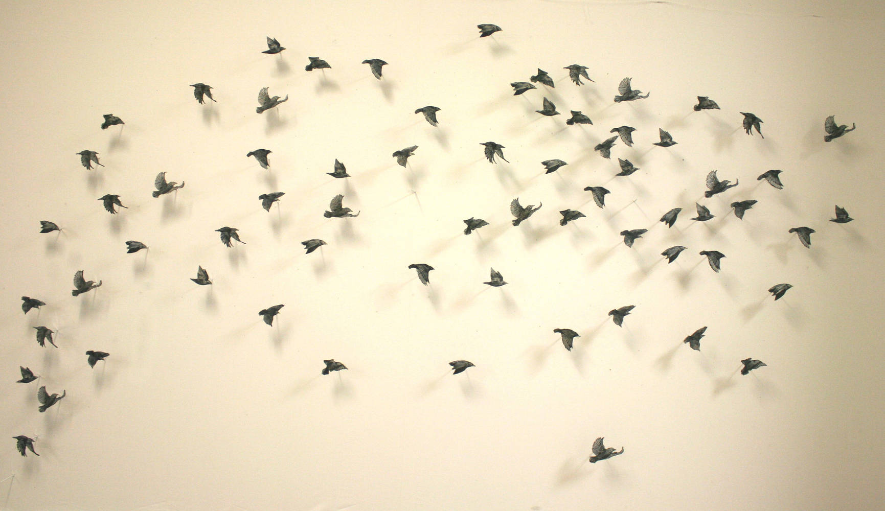 Print Three Dimensional Flock by Nicole Richards