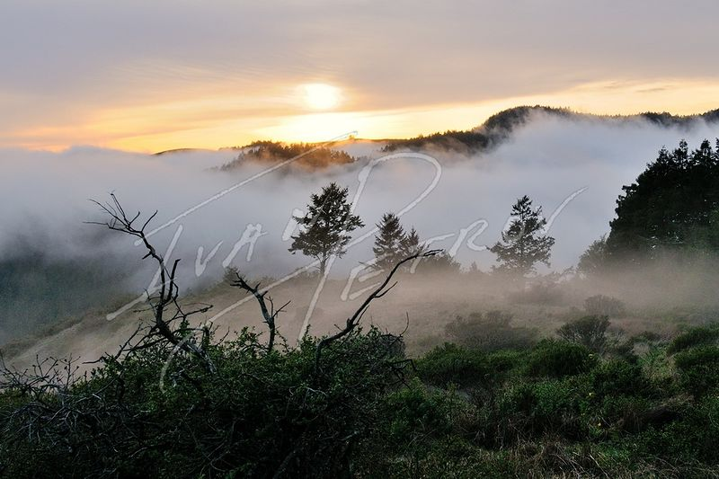 #SFO2 - Evening Fog In Marin Headlands by Ivan Petrov