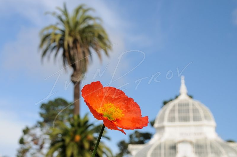 #SFO12 - Conservatory Of Flowers by Ivan Petrov