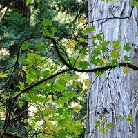 #SFO24 - Muir Woods Patterns #2 by Ivan Petrov