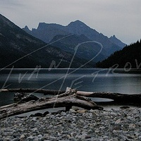 #YYC8 - Waterton Lakes Driftwood by Ivan Petrov