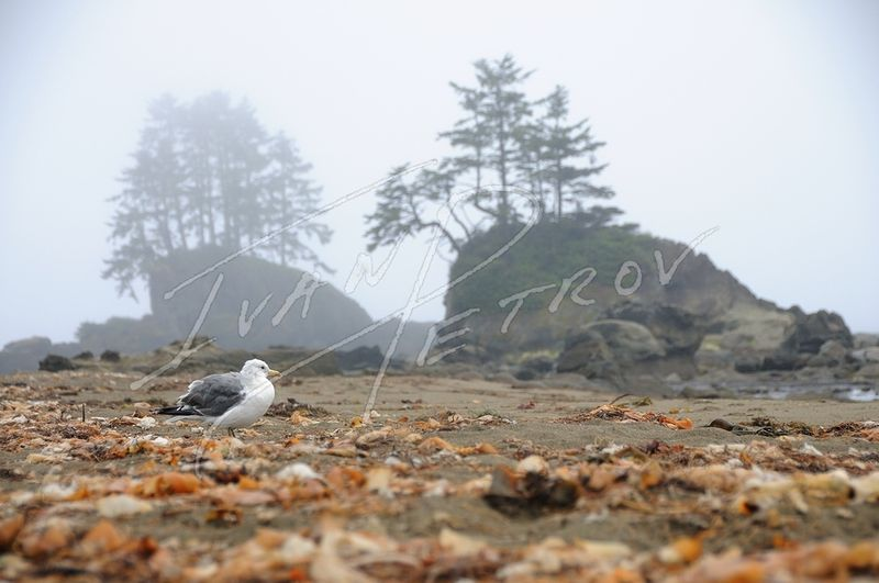 #YVR11 - Lone Seagull by Ivan Petrov