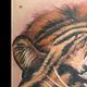Color Tiger Tofino B.C. by Erin  Burge