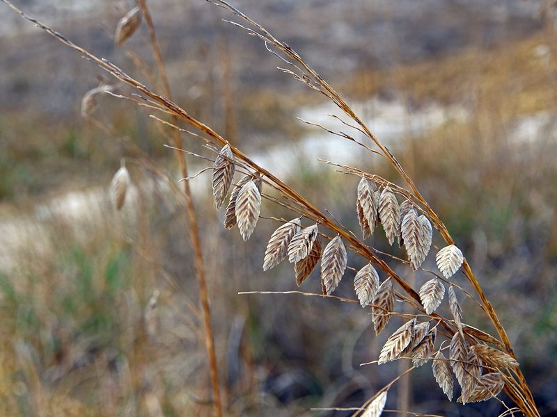 Delicate leaves on the Dunes at Back Bay National Wildlife Refuge by Michele Barnes