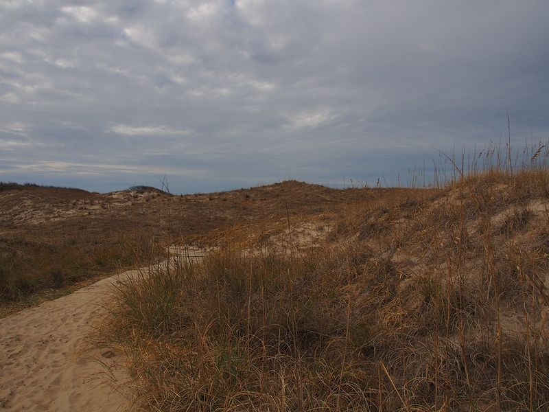 View of the Dunes at Back Bay National Wildlife Refuge by Michele Barnes