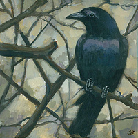 Print Crow C-091 by Cody Blomberg