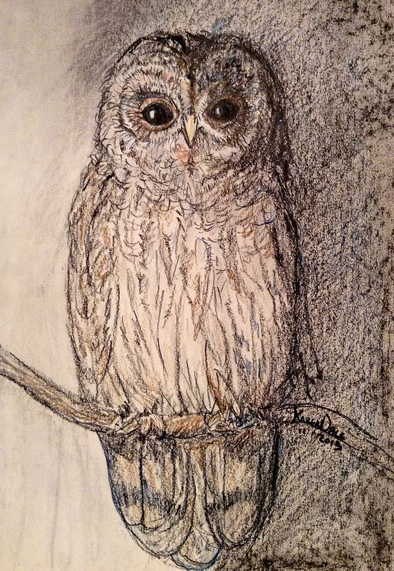 Drawing Barred Owl by Karen Brodeur