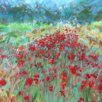 Cotignac Poppies by Lisa Printz