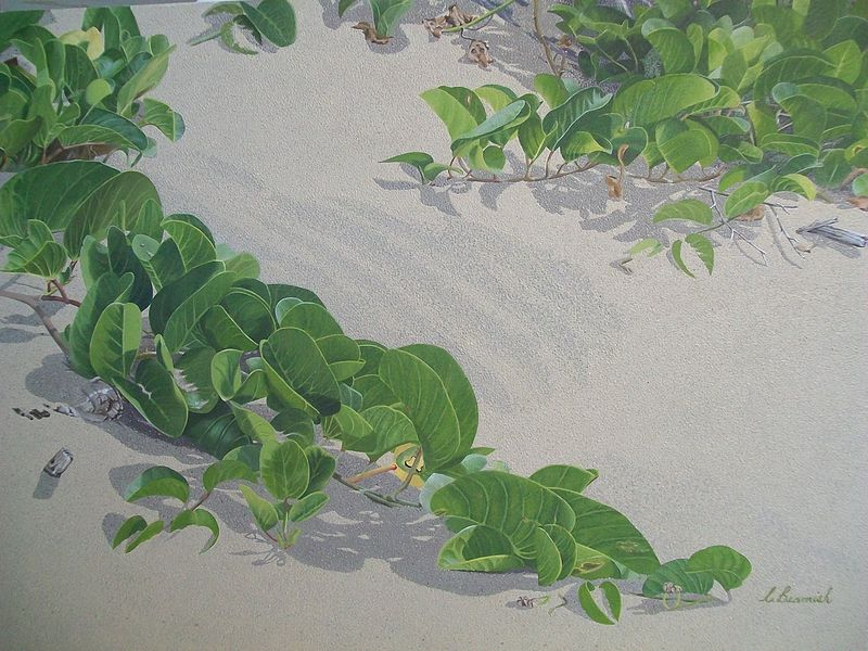 Oil painting Beach Morning Glory SOLD by Vicki Beamish