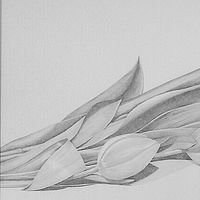 Drawing Tulips $800.00 by Vicki Beamish