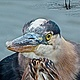 BIG BLUE HERON by Joeann Edmonds-Matthew