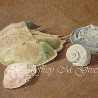 "© Jeffrey M Green. Shell Study, 9.5 x 12"", colored pencils. by Jeffrey Green"
