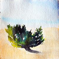 Watercolor A Tree Grows In Montauk by Edith dora Rey