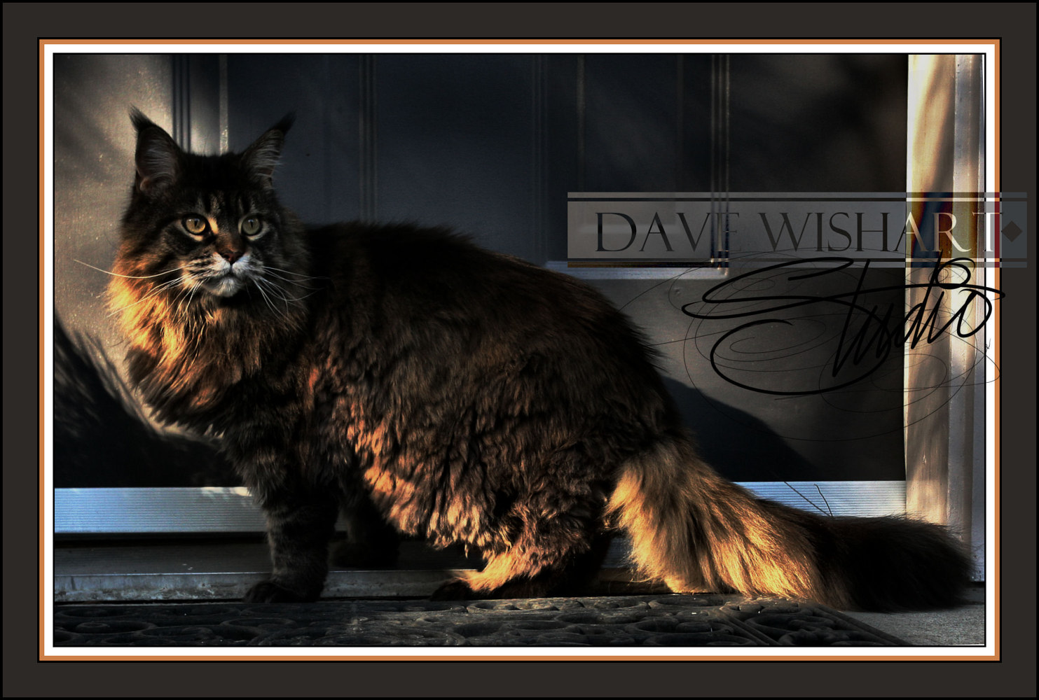 Peppy1 by Dave Wishart