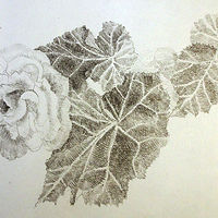 Pencil Sketch of a Rose by Michele Barnes