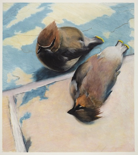 Cedar Waxwings by Mark Garrett