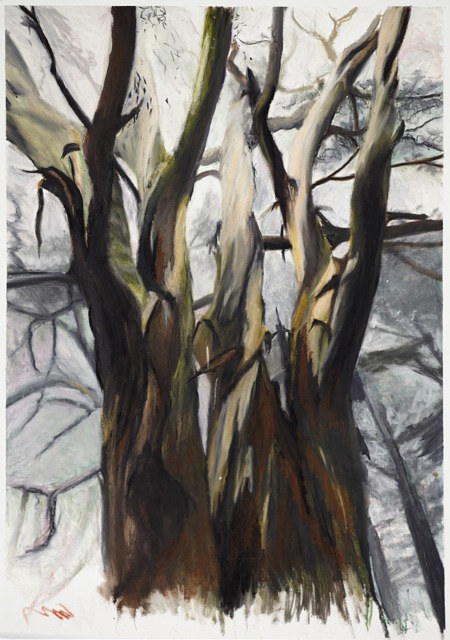 Oil painting Eucalyptus3 by Mark Garrett