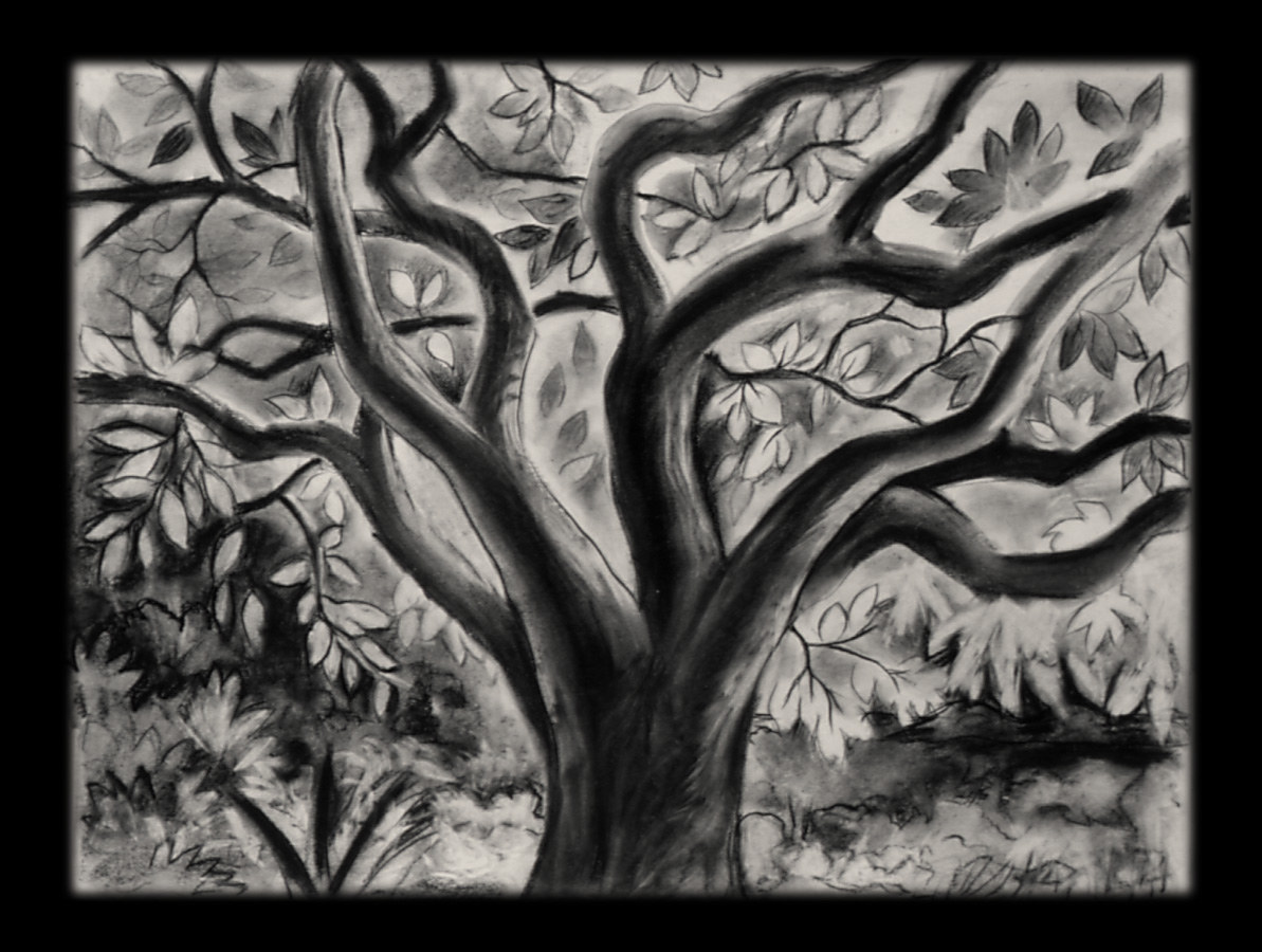 Grapefruit Tree. charcoal on paper by Laurey  Foulkes