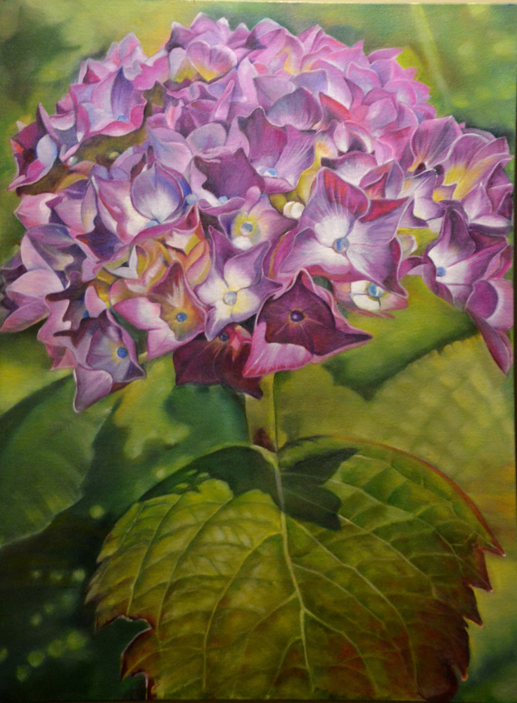Oil painting Hydrangea Cluster by Bev Robertson