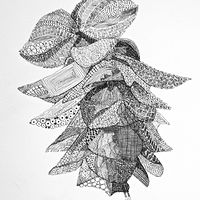 Drawing Oregano, Kent Beauty by Jane Crosby