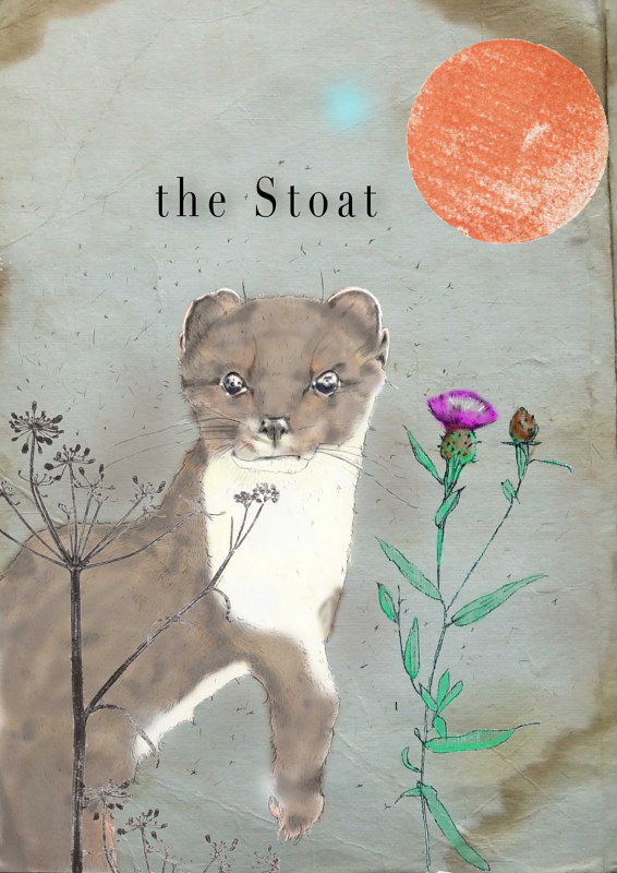 stoat by David Keane