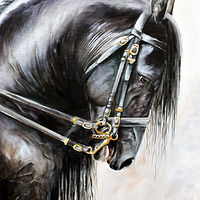Oil painting Friesian  by Debbie Hart