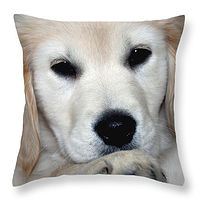 Print Fiona Puppy Throw Pillow by Debbie Hart