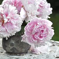 No.116 peonies on wicker by Jacqueline Janecke